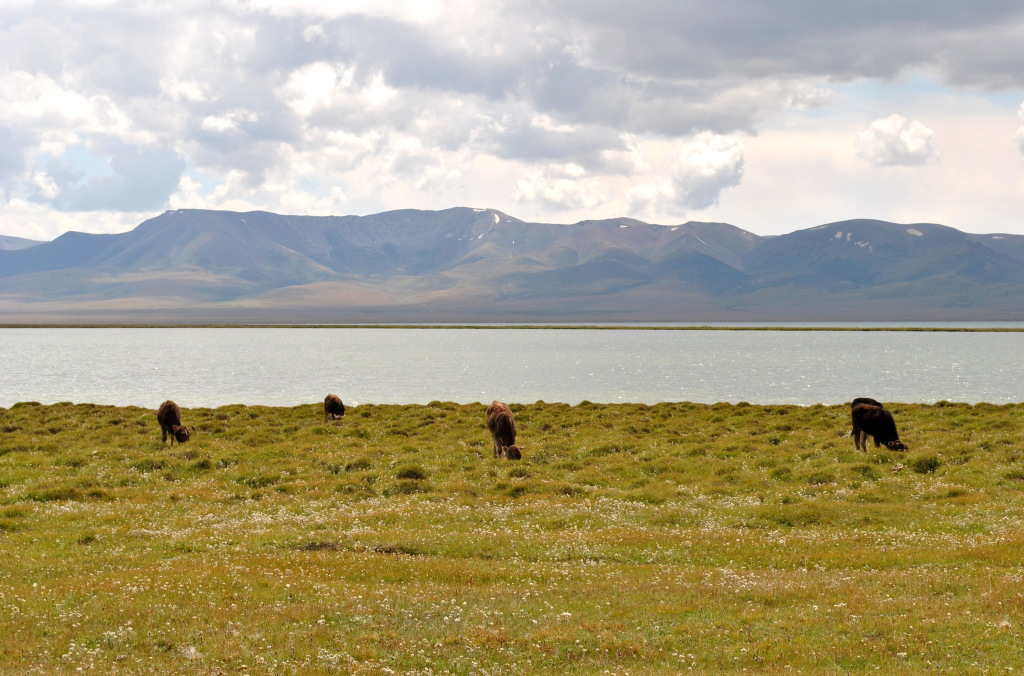 Kirgistan Song Kul, Check Out Kirgistan Song Kul : cnTRAVEL